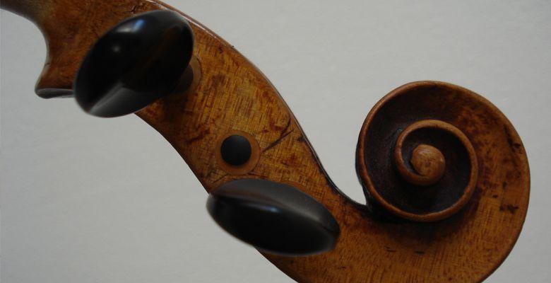Geigen-Schnecke